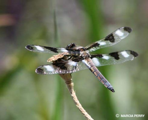 Dragonfly Pictures