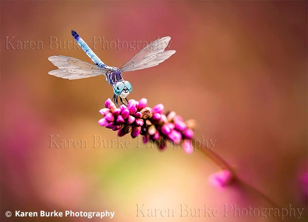 Dragonfly Print for Sale