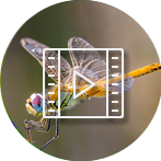 Dragonfly Videos